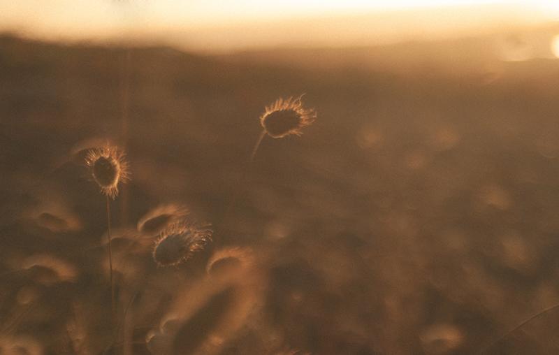 dreamy-summer - copia