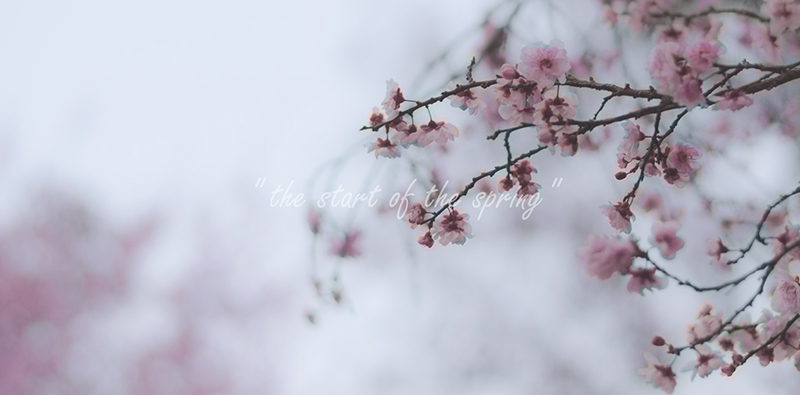 spring-now! 2